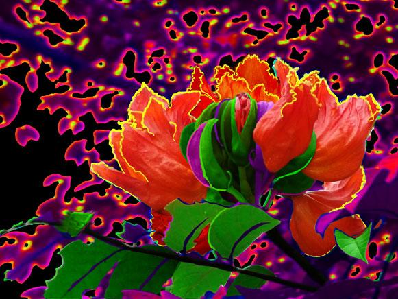 Photography - Digital Art