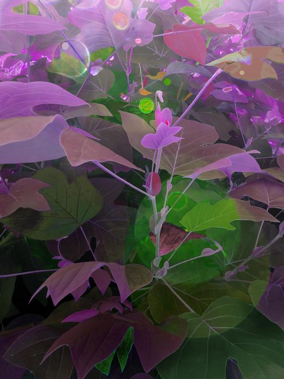 botanicalGardenLeaves